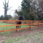 Equine Fencing
